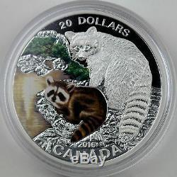 2016 20 $ Animaux Bébé Raton Laveur, 1 Oz 99,99% Pure Couleur Silver Coin Proof